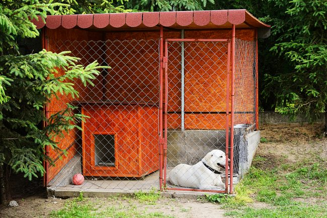 простой вольер для собак фото